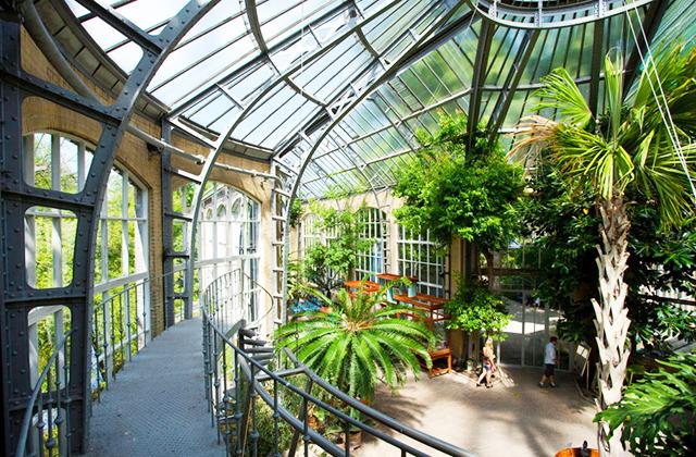 hortus-botanicus-amszterdam