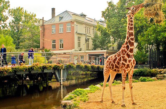 amszterdam-allatkert