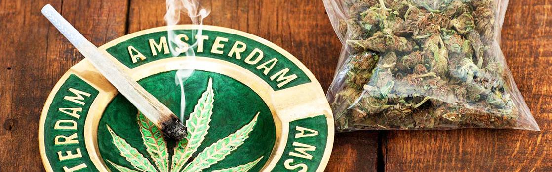 amszterdam fű